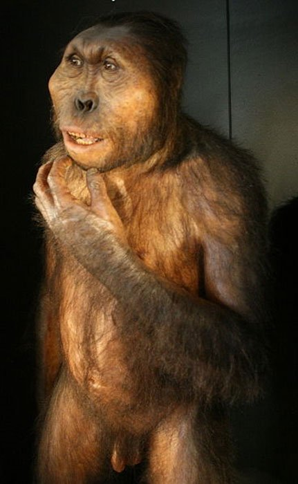 Reproduction of Paranthropus boisei
