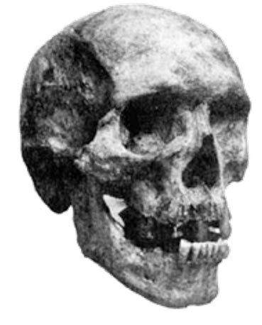 Skull said to have belonged to Zana's son Kehwit.