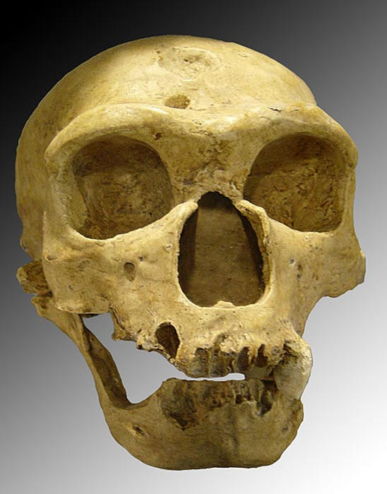 Skull discovered in 1908 at La Chapelle-aux-Saints (France).
