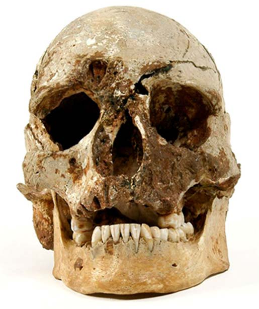 The Skull of Cheddar Man.