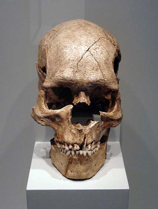Skull of the fossil Homo sapiens sapiens from the Epipaleolithic of Combe Capelle.