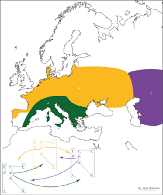 Spatial distribution and location of the 3 Neanderthal subpopulations. Southern Europe (labeled A in green), Northern Europe (labeled B in yellow), and Eastern Europe (labeled C in purple). The full demographic model we used to simulate Neanderthal population dynamics was composed of three sub-models corresponding to each of the identified sub-populations. We included a migration parameter (noted ψ) to allow for individuals to move from a sub-population to another. (Degioanni / CC BY-SA 4.0)