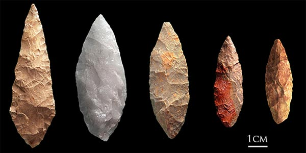 Still Bay spear points