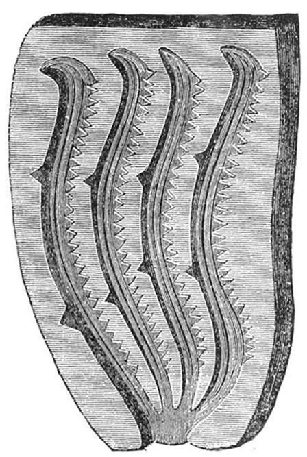 Stone mold for casting four bronze saws, Sweden. (1889 drawing)