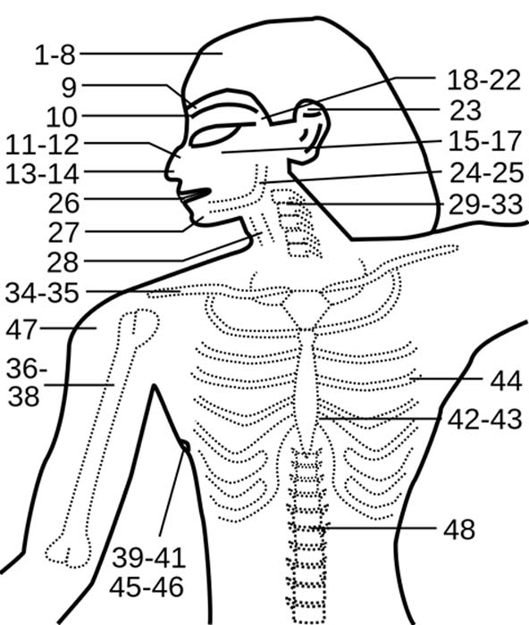 The Edwin Smith Papyrus Anatomical Distribution of Cases. (Sinuhe20 / CC BY-SA 3.0)