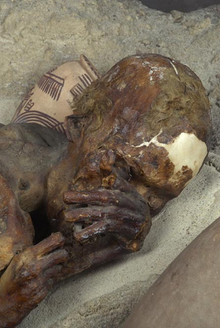 "Detail of ""The Ginger"" mummy."