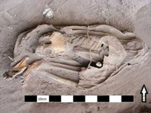 The intact mummy, covered with animal skin, as it was discovered at the base of a cliff in Botswana.