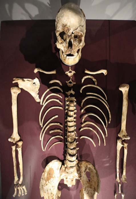 The upper body of Cheddar Man. (Geni / CC BY-SA 4.0)