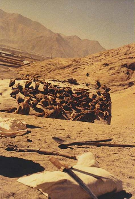 Vultures feeding on the rock used to expose bodies at a sky burial outside Lhasa, Tibet