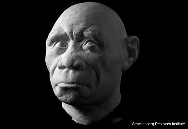 """The Hobbit"" - Homo floresiensis - Facial Reconstruction"