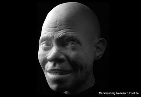 Homo sapiens - Facial Reconstruction