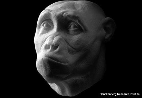 'Toumai' - Sahelanthropus tchadensis - Facial Reconstruction