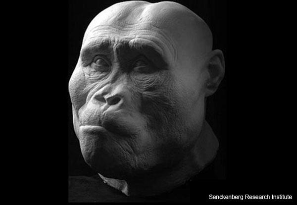 Australopithecus afarensis - Facial Reconstruction