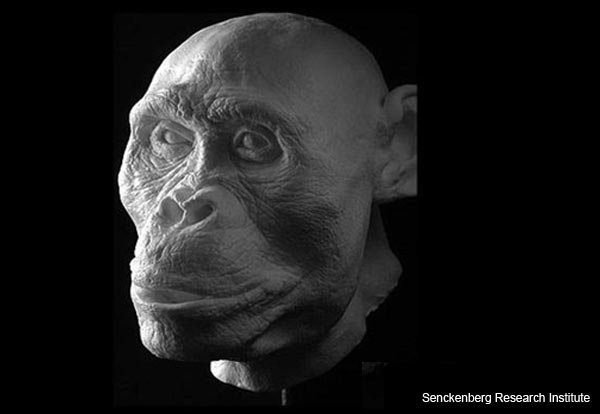 """Mrs Ples"" - Australopithecus africanus - Facial Reconstruction"