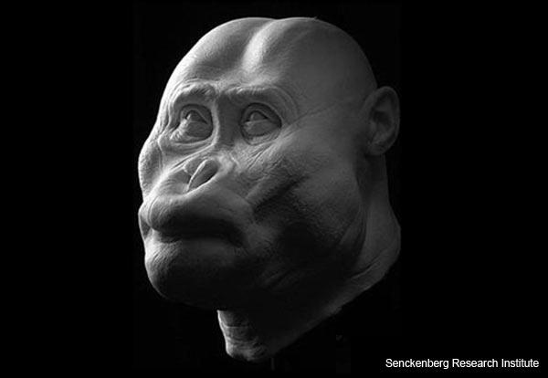 """""""Black Skull"""" - Paranthropus aethiopicus - Facial Reconstruction"""