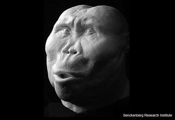 """Zinj"" - Paranthropus boisei - Facial Reconstruction"