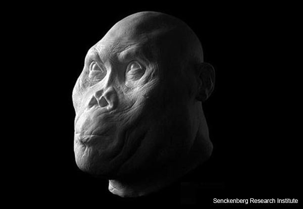 Homo rudolfensis - Facial Reconstruction
