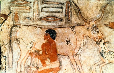 How Long Have Humans Been Drinking Milk