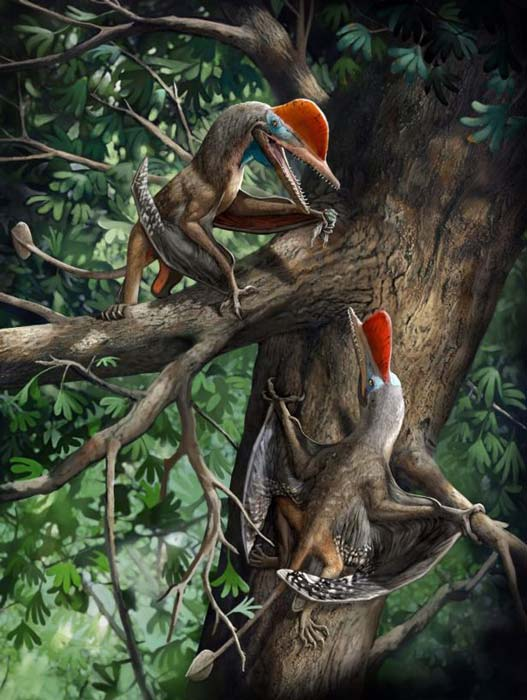 Full artwork of the recently discovered Monkeydactyl, the 160-million-year-old flying reptile discovered in northeast China. (Chuang Zhao / Current Biology)