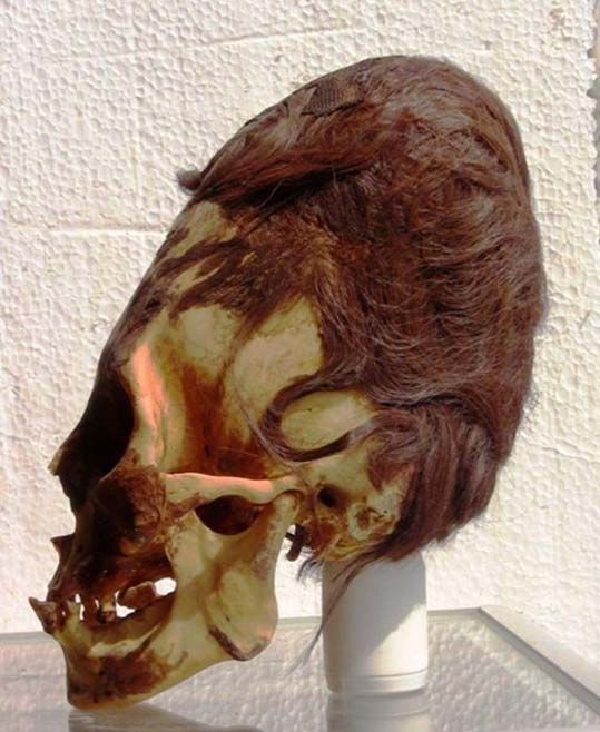 An elongated skull from Paracas, with its characteristic auburn hair.
