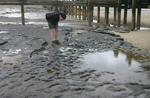 An archaeologist examining the exposed footprints in Happisburgh