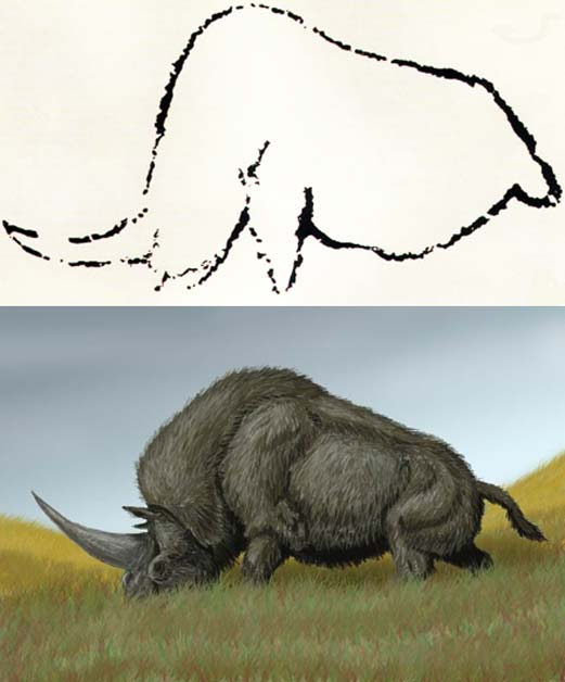 Top: Cave art from Rouffignac, France, thought to depict the extinct Elasmotherium. Bottom: Elasmotherium sibiricum.