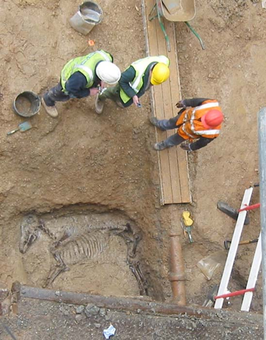 Excavation of a Roman horse burial in London in 2006. (Mididoctors~commonswiki / Public Domain)