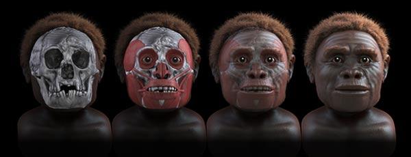 A facial reconstruction of Homo floresiensis