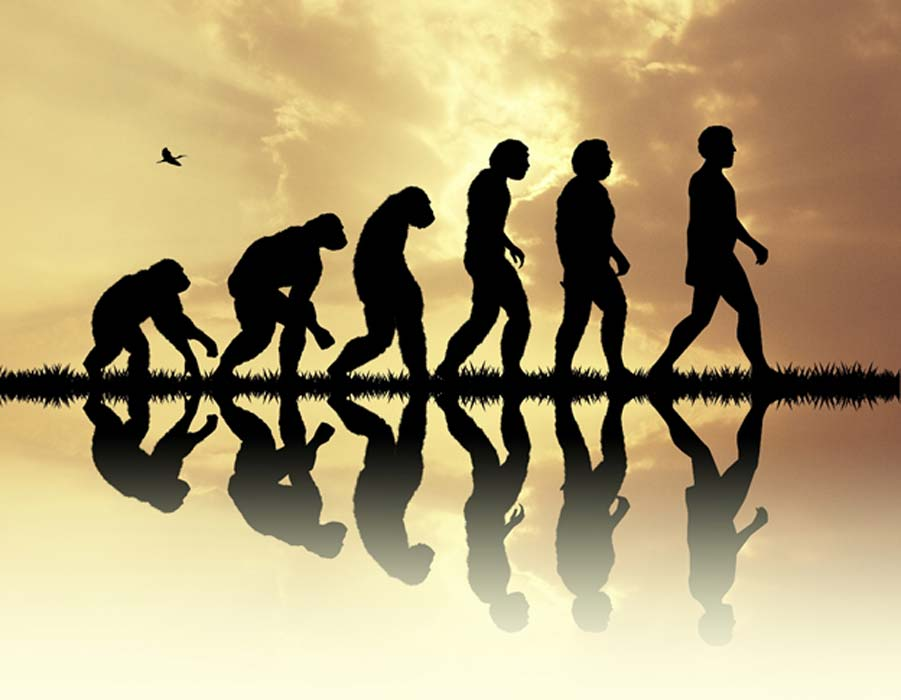 Evolution includes many now extinct human species.