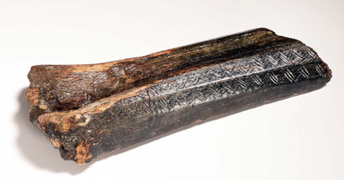 13,500 year old carved bison bone dredged from the North Sea.