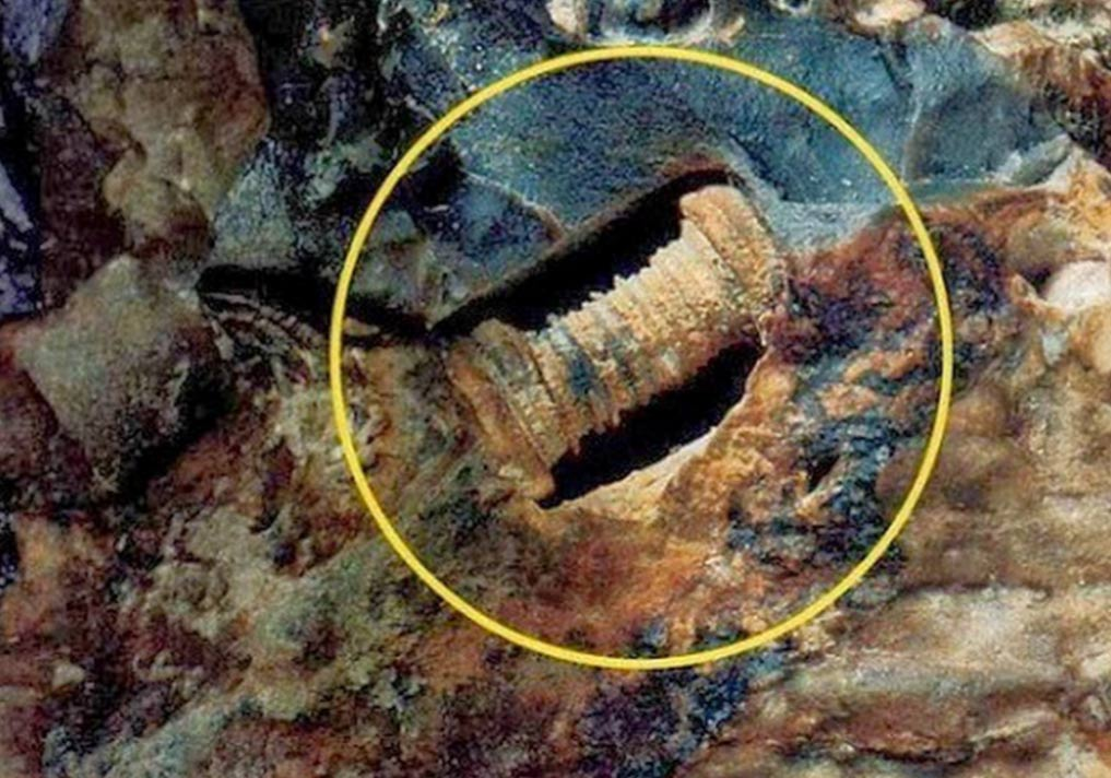 300 million-year-old screw
