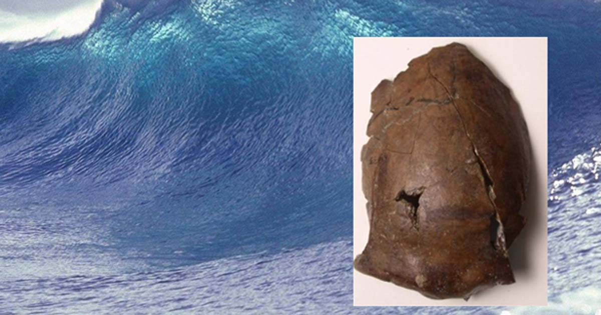 Main: A giant wave (public domain) Inset: This is the skull of a person who lived in what's now Papua New Guinea, 6,000 years ago.