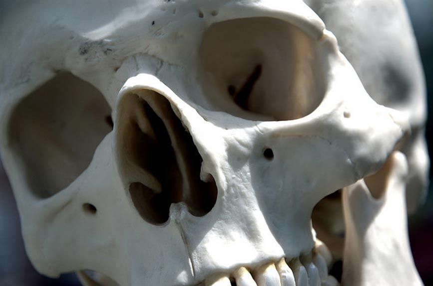 Giant 7 – 8 Foot Skeletons Uncovered in Ecuador sent for Scientific ...