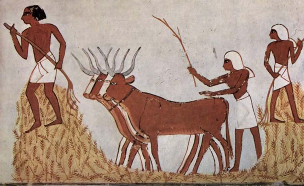 Egyptians with domesticated cattle and corn circa 1422-1411 BC