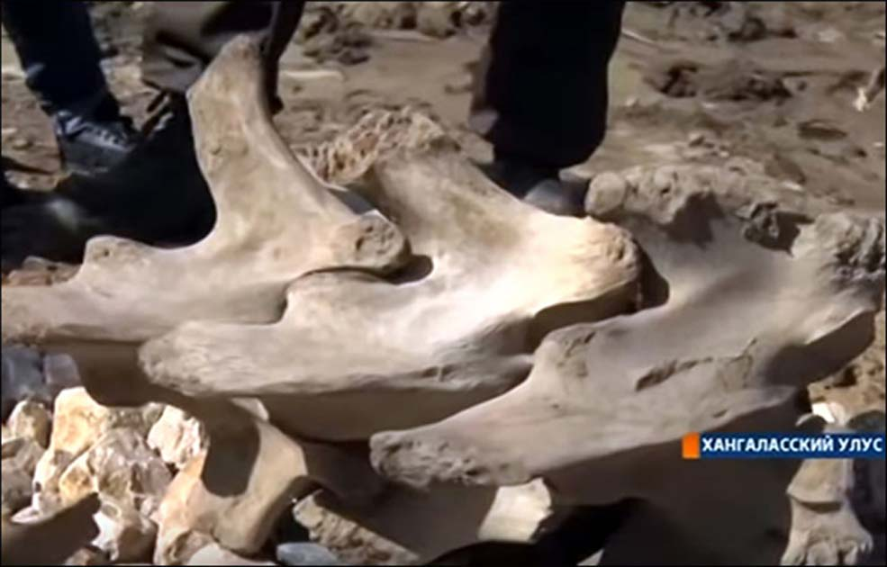 Ancient Bones of Mystery Creature Dug up by Children in Yakutian Village