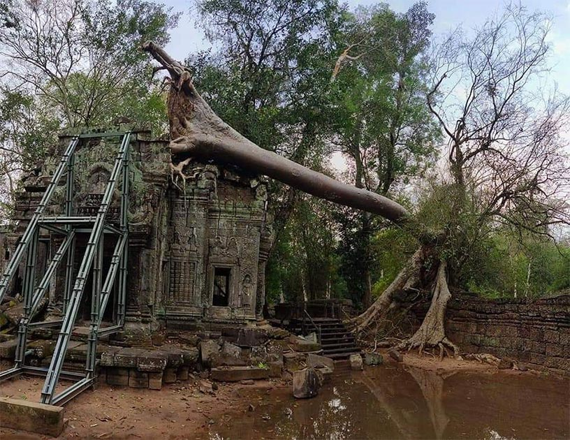 Severe storms cause ancient trees to fall at Angkor Wat. Source: Knongspor.