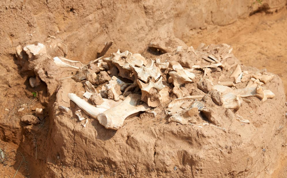 Archaeological excavations illuminate human environmental impact.