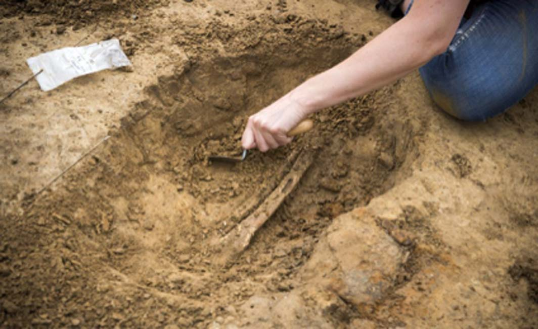 One of the human leg bones being excavated at Mont‐Saint‐Jean Field Hospital. Source: Chris van Houts / Waterloo Uncovered.