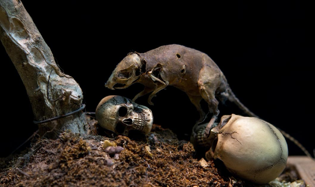 The Black Death was spread across Europe by rats. Source: rawinfoto / Adobe Stock.