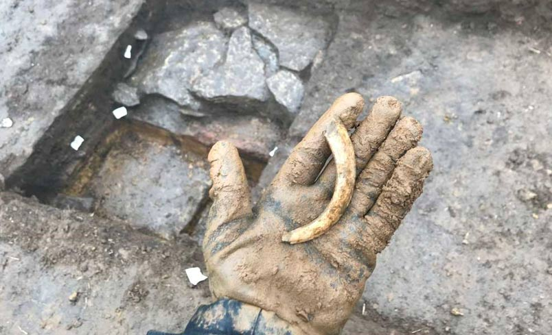 A Boar tusk was discovered at a Roman Villa