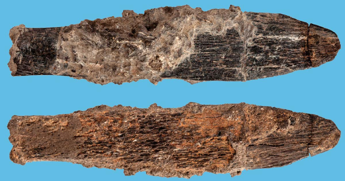 Bone knife from Morocco oldest attributed to Aterians. Source: © Trustees of the Natural History Museum, London (2018), S. Bello and  Mohammed Kamal (Fotokam, Morocco)