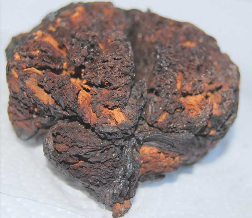 The 4000-year-old brain tissue found in Seyitömer Höyük, Turkey.