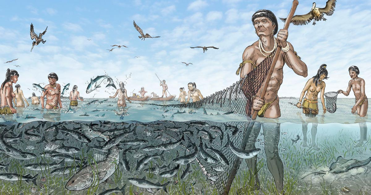 Once the Calusa captured fished, they were likely harvested with seine or dip nets or speared, said archaeologist William Marquardt. Source: Florida Museum / Merald Clark