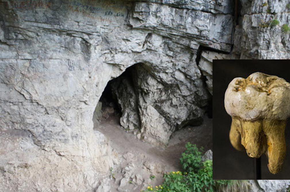 Denisova Cave, Russia. Inset: Denisovan molar discovered in Denisova Cave, Replica in Museum of Natural Sciences in Brussels, Belgium.