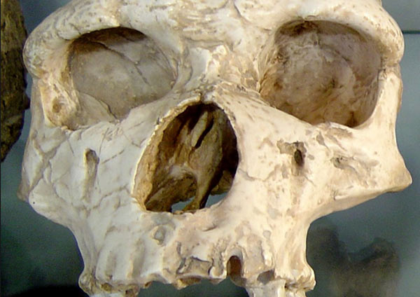 Early Humans Homo Erectus China