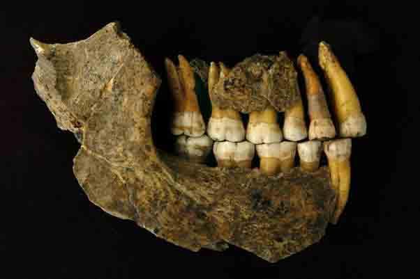 New Testing Indicates European Neanderthals Vanished Earlier