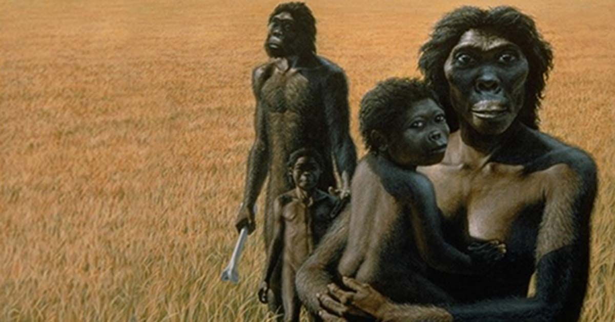 The Evolution of Human Birth: An Incredible Story a ...