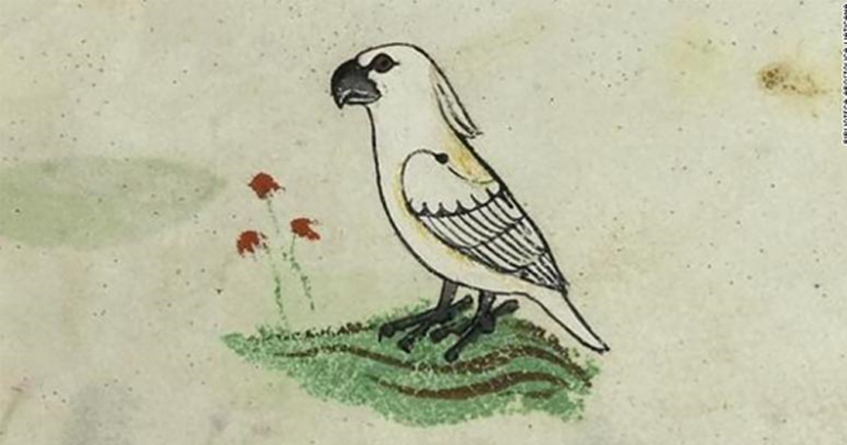 One of the four images of the cockatoo gifted to Frederick II by the 'Sultan of Babylon'.