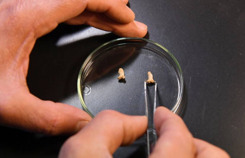 Finger bones of Homo sapiens neanderthalensis found in Poland.