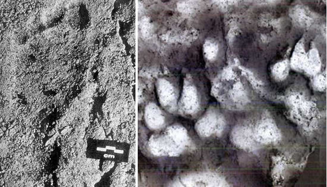 26000 Year Old Child Footprints Found Alongside Paw Prints Reveal